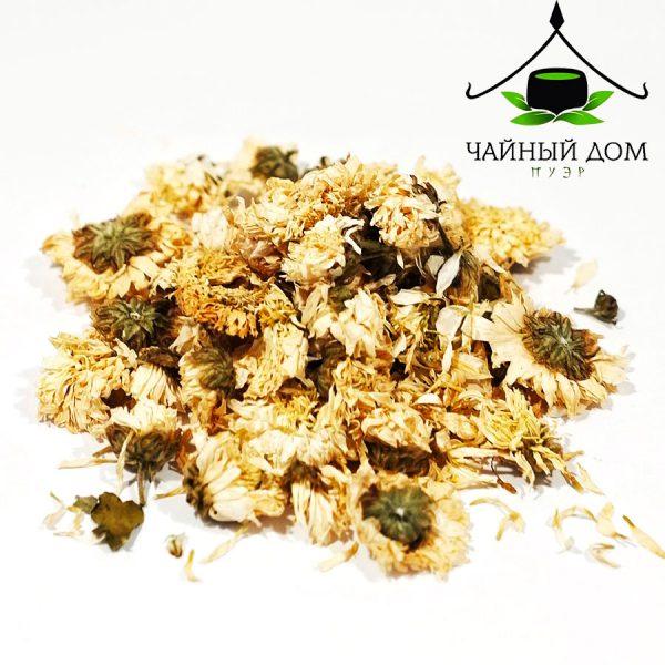 Hrizantema Belaia Teahousepuer Product
